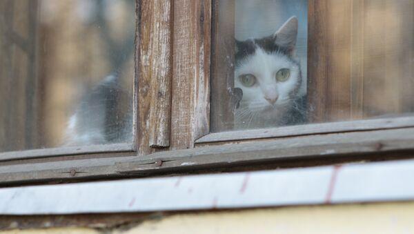 Кот на окне в доме в Осмоловке - Sputnik Беларусь