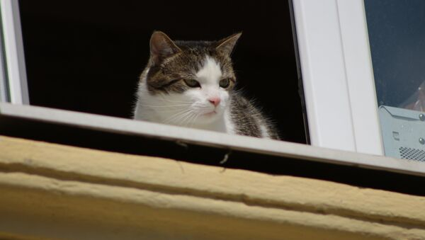Кошки на окошке - Sputnik Беларусь