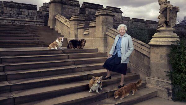 Елизавета II во время прогулки возле Виндзорского замка со своими собаками - корги Уиллоу и Холли и дорги Вулканом и Кэнди - Sputnik Беларусь