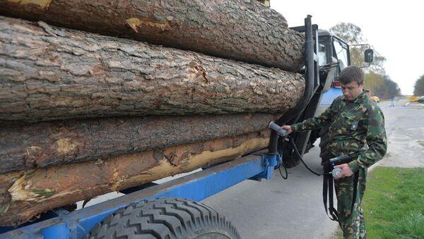 Дозиметрический контроль древесины - Sputnik Беларусь