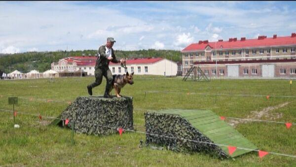 Четвероногие сыграли в дог-биатлон - Sputnik Беларусь