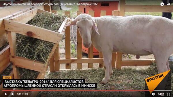 Выстава ў Мінску - Sputnik Беларусь