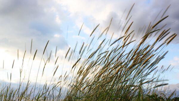 Ветер в поле. Архивное фото - Sputnik Беларусь