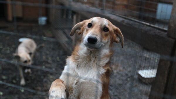 Собаки в вольере. Архивное фото - Sputnik Беларусь