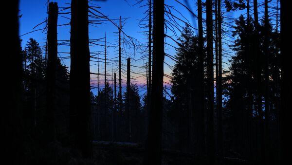 Ночной лес - Sputnik Беларусь