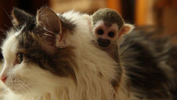 Кранальная гісторыя: гэтая котка замяніла маму маленькай малпачцы – відэа - Sputnik Беларусь