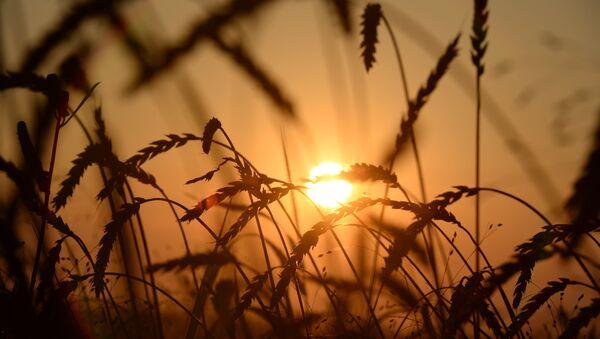 Уборка урожая. Архивное фото - Sputnik Беларусь