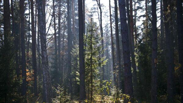 Лес в Беларуси. Архивное фото - Sputnik Беларусь