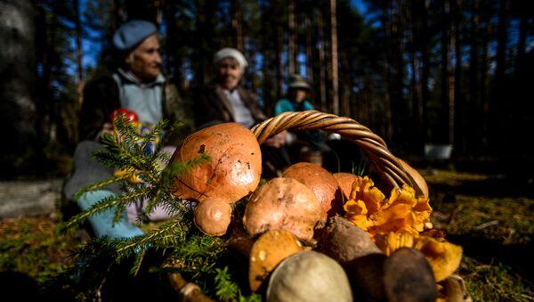 Сбор грибов в Новгородской области - Sputnik Беларусь