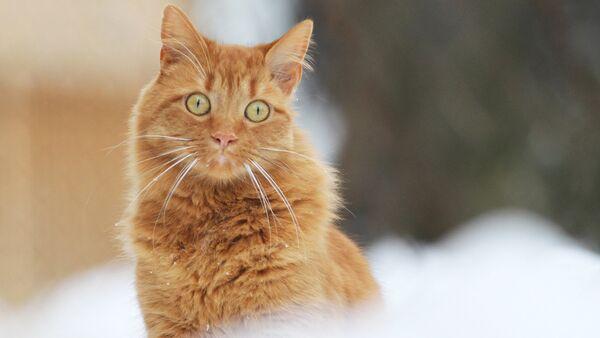 Кот і сняжынкі - Sputnik Беларусь