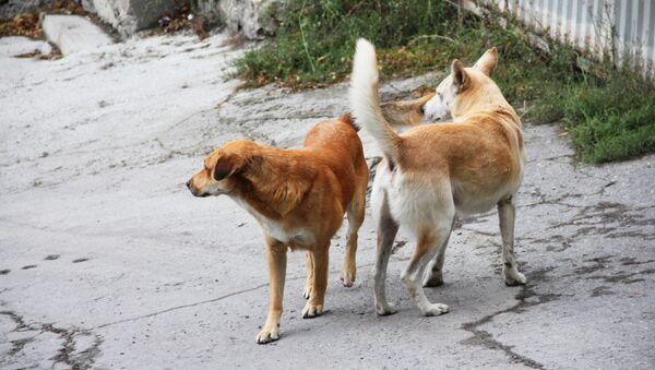 Бездомные собаки, архивное фото - Sputnik Беларусь