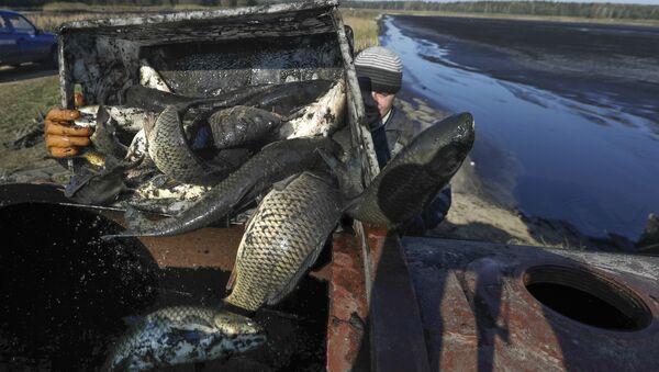 Рыбгас Хотаў ў Стаўбцоўскім раёне каля пасёлка Школьны - Sputnik Беларусь