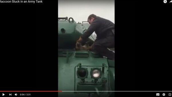 Янот не пралез у Бульдог: як ратавалі жывёлу, якая захрасла ў танку - Sputnik Беларусь