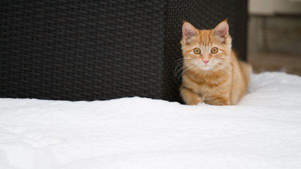 Кот у снезе - Sputnik Беларусь