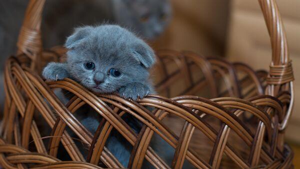 Грустный котенок - Sputnik Беларусь