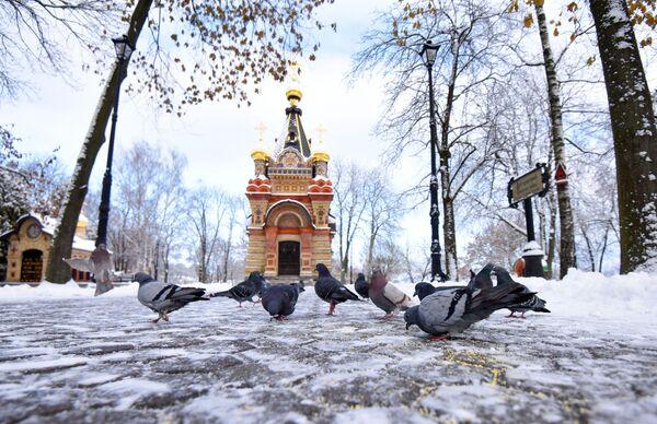 Галубы ў парку Гомеля - Sputnik Беларусь