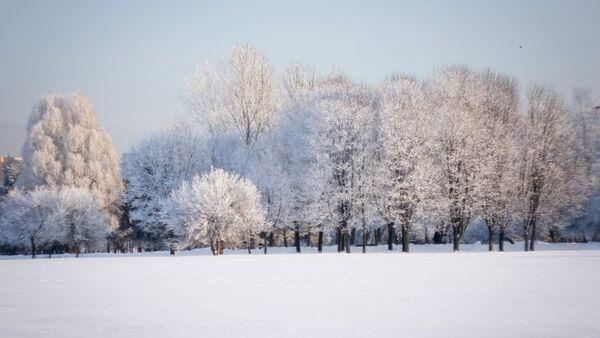Снежны лес - Sputnik Беларусь