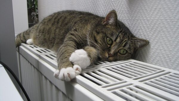 кот на батарэі - Sputnik Беларусь