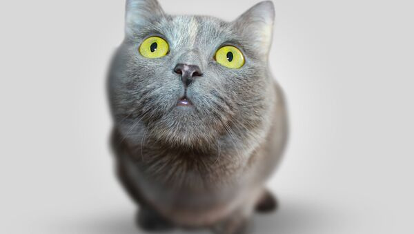 Удивленный кот - Sputnik Беларусь