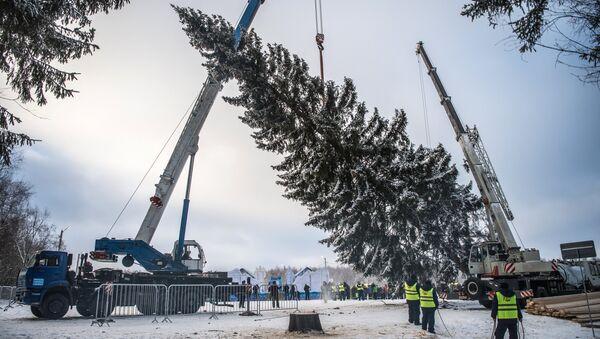 Рубка новогодней ели - Sputnik Беларусь