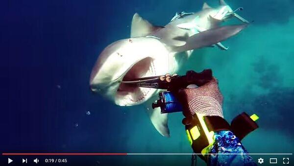 Відэа нападу акулы на дайвера - Sputnik Беларусь
