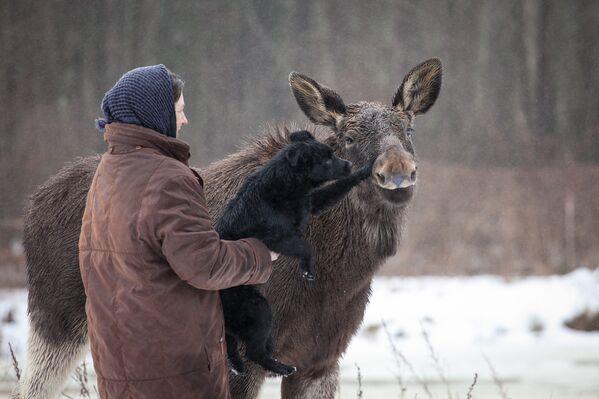 На ферме живет лось Гриша - Sputnik Беларусь