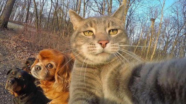 Manny The Selfie Cat - Селфі-кот Мэні - Sputnik Беларусь