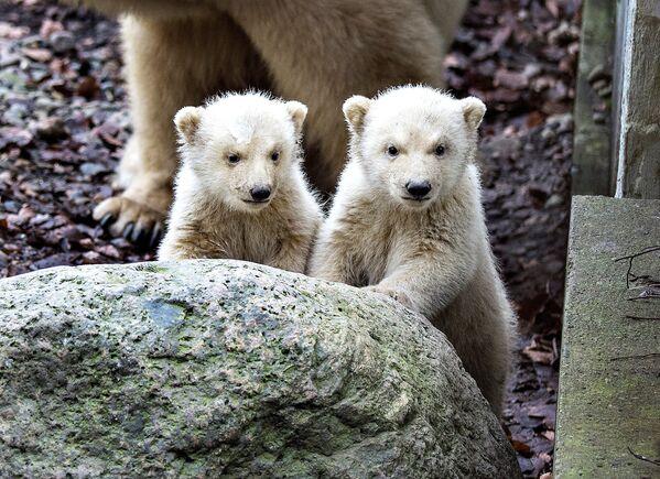 Забавно, что у белого медведя— черная кожа. - Sputnik Беларусь
