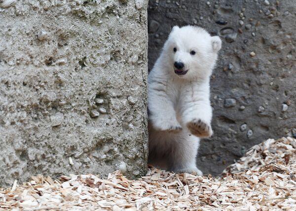 Самые мелкие медведи водятся на Шпицбергене, самые крупные — в Беринговом море. - Sputnik Беларусь