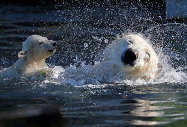Очень важно для медведя научиться плавать. - Sputnik Беларусь