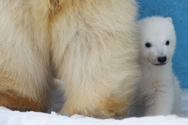 Они рождаются маленькие, размером с кошку или кролика. - Sputnik Беларусь
