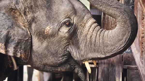Африканский слон - Sputnik Беларусь