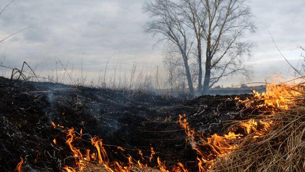 Горение сухой травы, архивное фото - Sputnik Беларусь