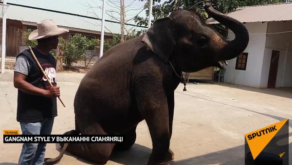 Відэафакт: сланяня танчыць пад Gangnam Style - Sputnik Беларусь
