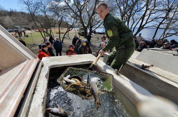 Зарыбление водоема щукой - Sputnik Беларусь
