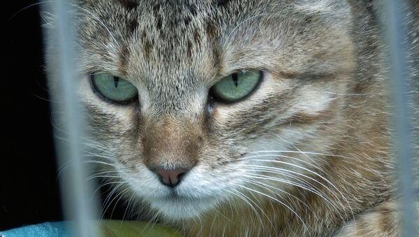 Котам и собакам искали новых хозяев - Sputnik Беларусь