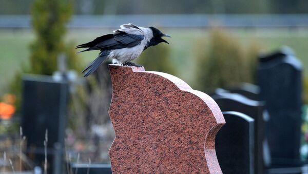 Ворон на памятнике  - Sputnik Беларусь