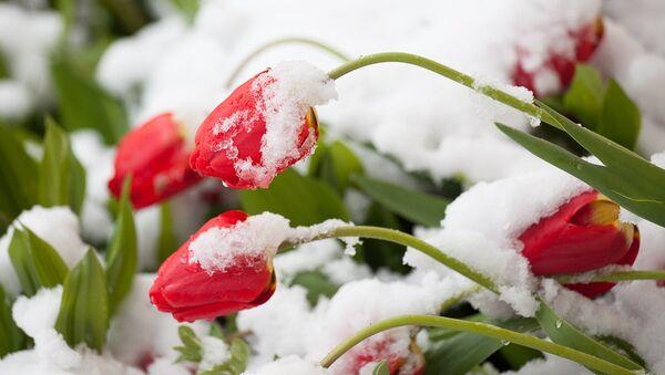 Снег у маі - Sputnik Беларусь