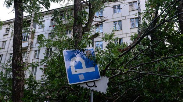 Наступствы ўрагану - Sputnik Беларусь