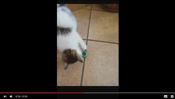 Котенок и спиннер: как новомодная игрушка завоевывает сердца животных - Sputnik Беларусь