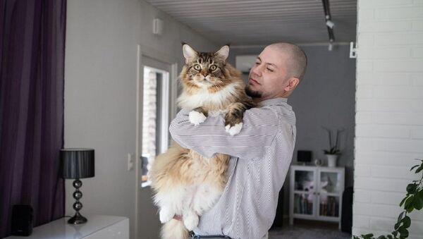 Кот пароды мэйн-кун з Фінляндыі - Sputnik Беларусь