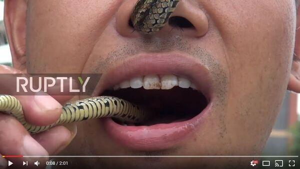 Китаец продевает ядовитую змею через нос и достает изо рта, видео - Sputnik Беларусь