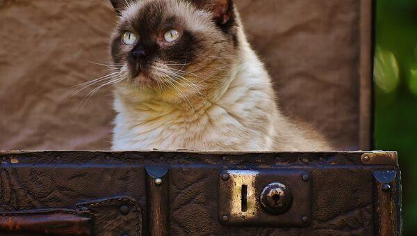 Кошка в чемодане, архивное фото - Sputnik Беларусь