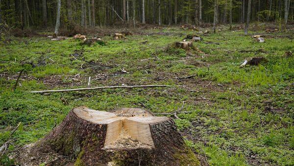 Вырубка деревьев в лесу, архивное фото - Sputnik Беларусь