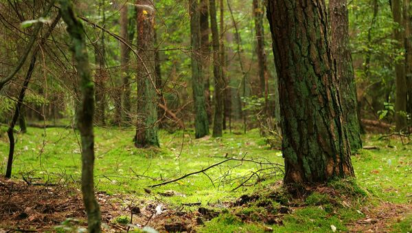 Лес, архивное фото - Sputnik Беларусь