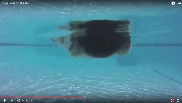 Грацыёзны заплыў коргі ў басейне за дзень паглядзелі 170 тыс. чалавек - Sputnik Беларусь
