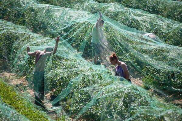 Раньше на ферме выращивали тюльпаны, огурцы и грибы. - Sputnik Беларусь