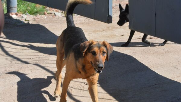 Собаки, архивное фото - Sputnik Беларусь