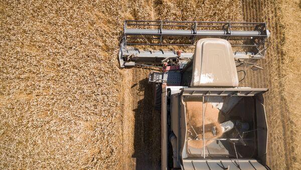 Уборка зерновых, архивное фото - Sputnik Беларусь