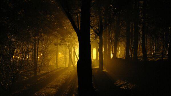 Ночной лес, архивное фото - Sputnik Беларусь